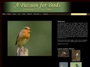 Bird Photography By Steve Shaw