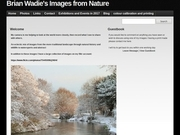 Brian Wadie's  Images From Nature