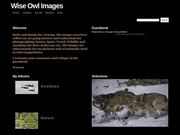 Wise Owl Images