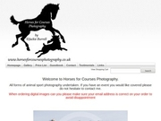 Horses For Courses Photography