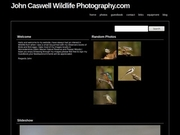 John Caswell Wildlife Photography.com